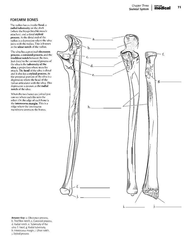 Kaplan Anatomy Coloring Book.pdf   Estudio