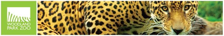 Woodland Park Zoo - Photography Internship