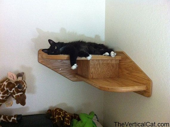 The 25 best cat stairs ideas on pinterest cat climbing for Kitty corner bed ideas