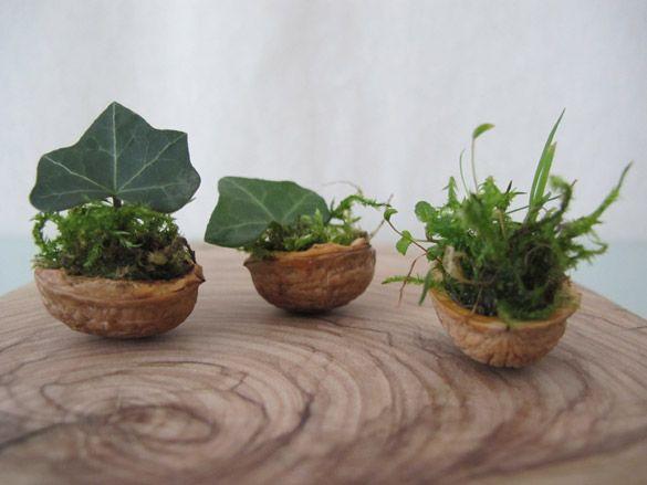 Minigarten in Walnusshälften gefüllt mit Moos & Efeu - perfekte DIY Idee für eine märchenhafte Deko, als Geschenk für kleine Feen und Waldzwerge! Auch für kleine und ungeduldige Kinder bestens zum Basteln in Herbst &Winter geeignet.