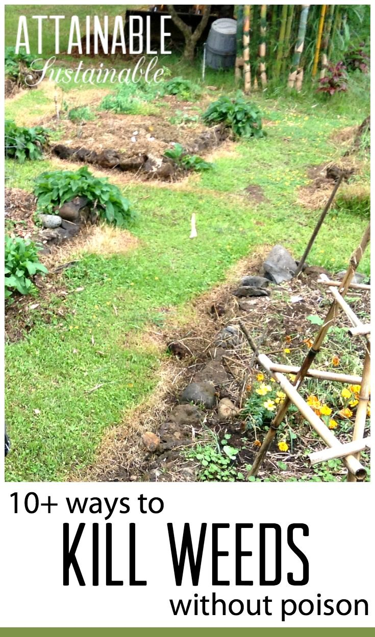 Spraying weeds in flower beds - Natural Weed Killers 11 Ways To Kill Weeds Without Poison