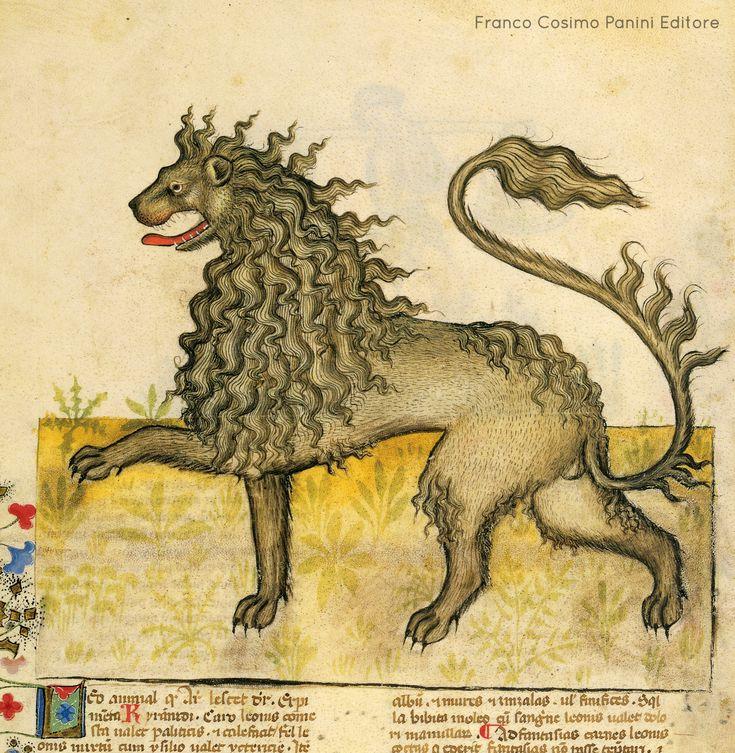"""""""Secondo gli esperimenti di Kiranides, la midolla di leone giova ai melanconici timorosi. Se l'urina del leone viene annusata dal cane, il cane si dà alla fuga. Per avere in odio il vino, si somministra lo sterco di leone misto al vino. Il leone teme il gallo, soprattutto quello bianco, i topi, le zanzare e i piccoli insetti. Chi non vuole concepire deve sospendere al braccio una particella di vulva di leone e non concepirà."""" http://www.foliamagazine.it/wp-content/uploads/2013/10/Leone.jpg"""