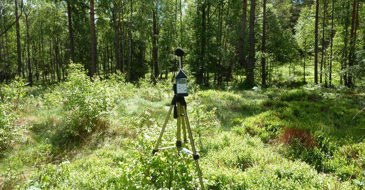 Vår hörsel fungerar bra i skogen