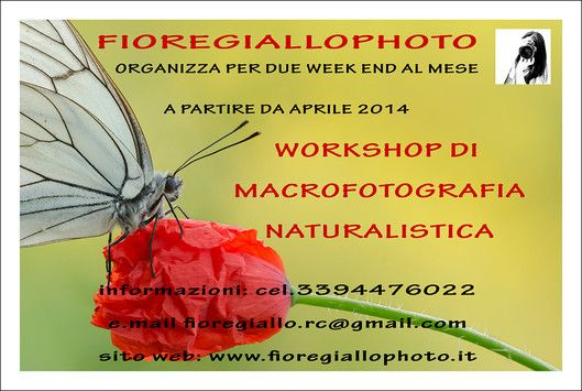 Workshop di macrofotografia naturalistica