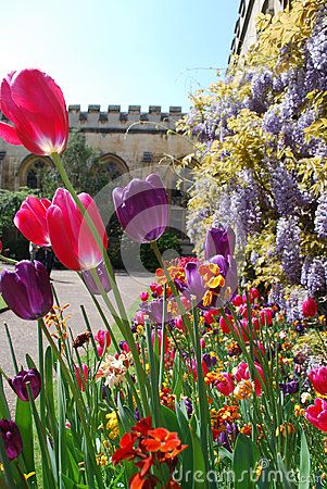 48 best flowers images on pinterest image stock photos and bloemen spring flowers in the gardens of oxford collage in england mightylinksfo