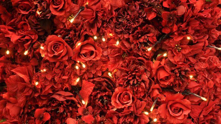 HD Flower Wallpaper Red Roses Lights - Best Wallpaper HD