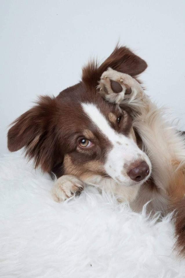 ein hund braucht bewegung sonst noch was hund tricks. Black Bedroom Furniture Sets. Home Design Ideas