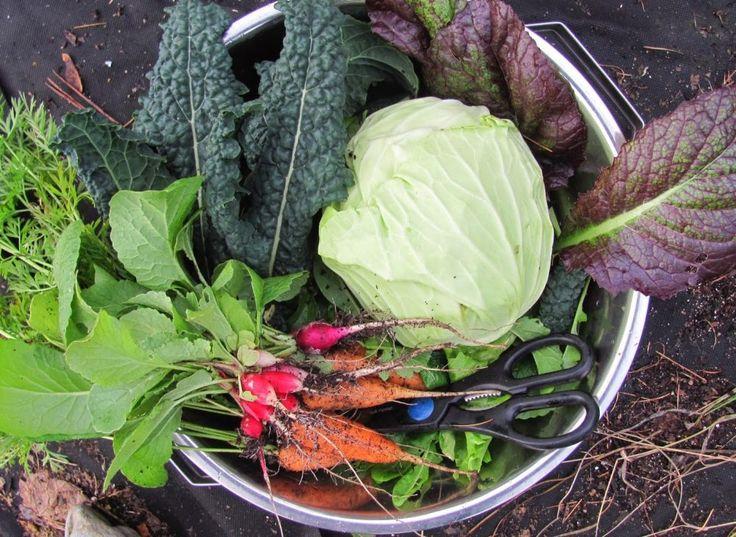 247 Best Veg Fall Winter Vegetables Images On Pinterest 400 x 300