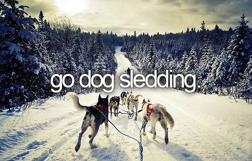 Go Dog Sledding / Bucket List Ideas / Before I Die