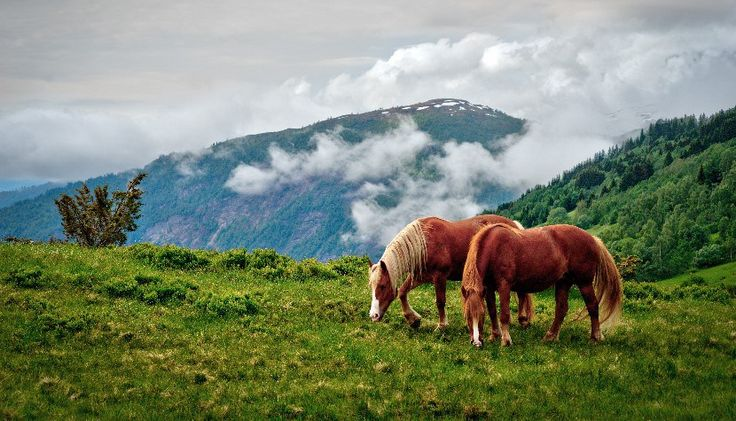 doTERRA Essential Oils for Horses
