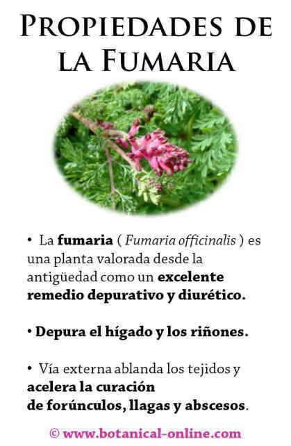dolores por acido urico alto como curar el acido urico con plantas efectos nocivos del acido urico