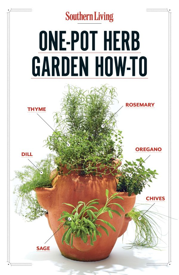 How To Grow Your Own One Pot Herb Garden | DIY | Thyme, Rosemary, Dill, Oregano, Chives and Sage together in one spot.