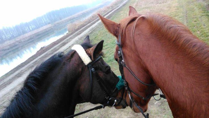 horsefriends
