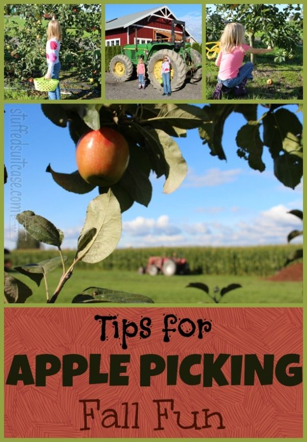 Apple Picking Tips for Fall Family Fun Activity with Kids - Tips for visiting an apple farm (orchard) via StuffedSuitcase.com