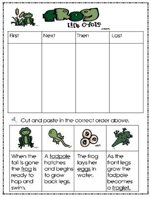 The Life Cycle of a Frog...freebie!
