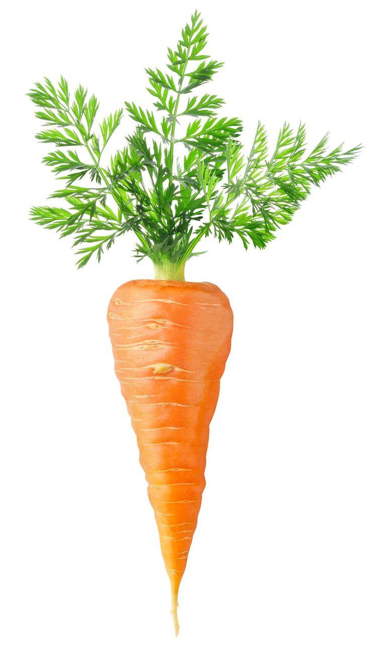 Bilderesultat for carrot plant