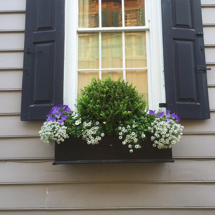 Charleston window box with year-round boxwood surrounded by annuals