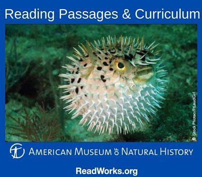 The American Museum Of Natural History Reading Comprehension