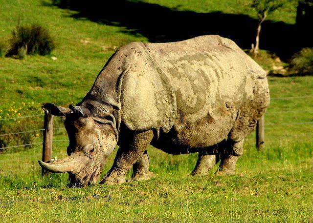 Give this a read 👉 Connaisez-vous le #Rhinocéros de #Normandie #Zoo #Cerza http://normandiedaily.blogspot.com/2017/06/connaisez-vous-le-rhinoceros-de.html?utm_campaign=crowdfire&utm_content=crowdfire&utm_medium=social&utm_source=pinterest