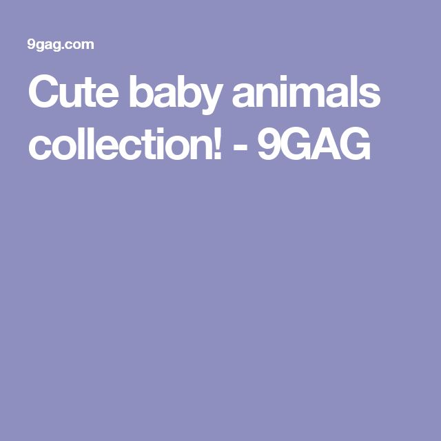 Cute baby animals collection! - 9GAG