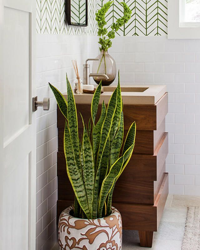 Best Bathroom Plants, Plants For Bathroom And