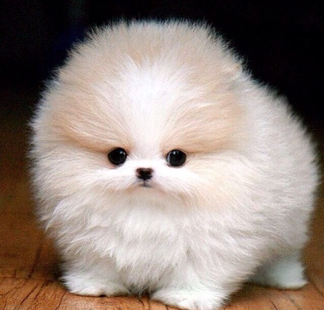 its a cotton ball ❤️❤️❤️☺️