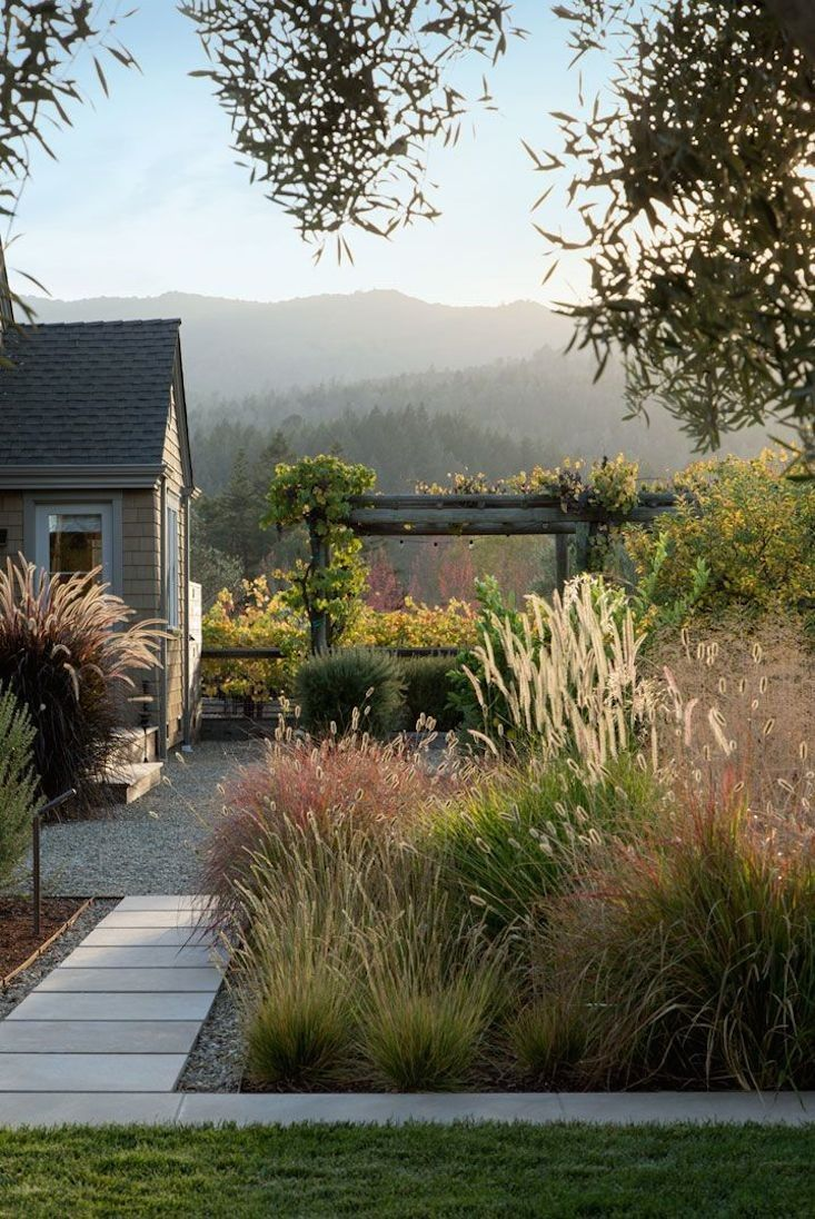 Perennial grasses vineyard landscape inspired by Piet Oudolf