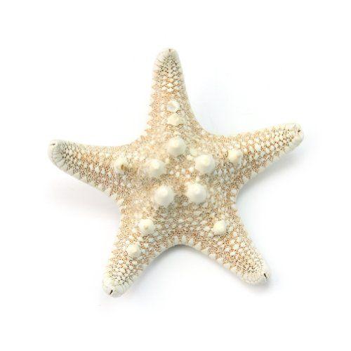 Magnifique Pince à cheveux étoile de mer Barrette au Mariage Mer Plage | Your #1 Source for Beauty Products