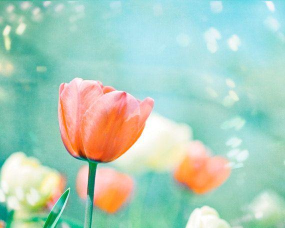 "Flower Photography - tulips peach mint print spring orange aqua blue nature floral coral cream pastel wall photograph, ""Garden of Dreams"" by Caroline Cochrane"