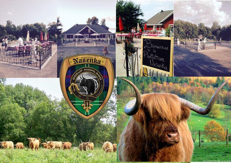 Domaine Nasenka, L'Assomption, pour un mariage en plein air, en toute simplicité, qu'il soit rustique, champêre, country ou simplement voisin d'un élevage de ces magnifiques Bovins Highland.