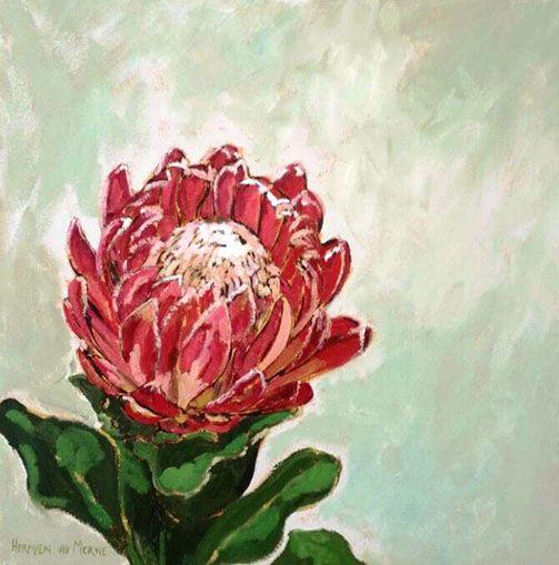 Title: Stellendale Protea 2 Medium: Oil paint on canvas Size: 500mm x 500mm
