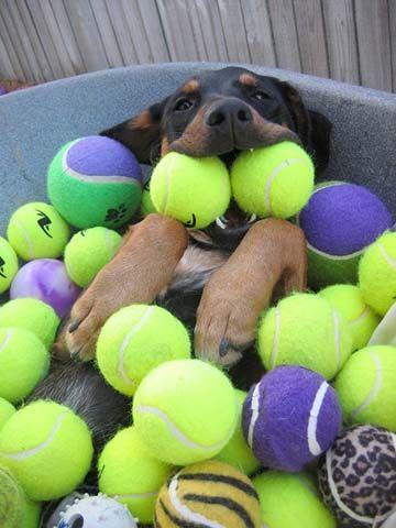 Happy. #dogs