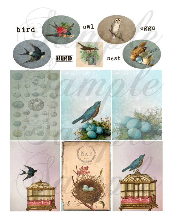 TiffanyJane-For the Love of Birds Collage Sheet by TiffanyJane (Craft Supplies & Tools, Scrapbooking Supplies, Scrapbooking Clip Art, tiffanyjane, spring, birds, eggs, roses, nest, owl, ecs, zne, bird cage, tags, art, embellishment)
