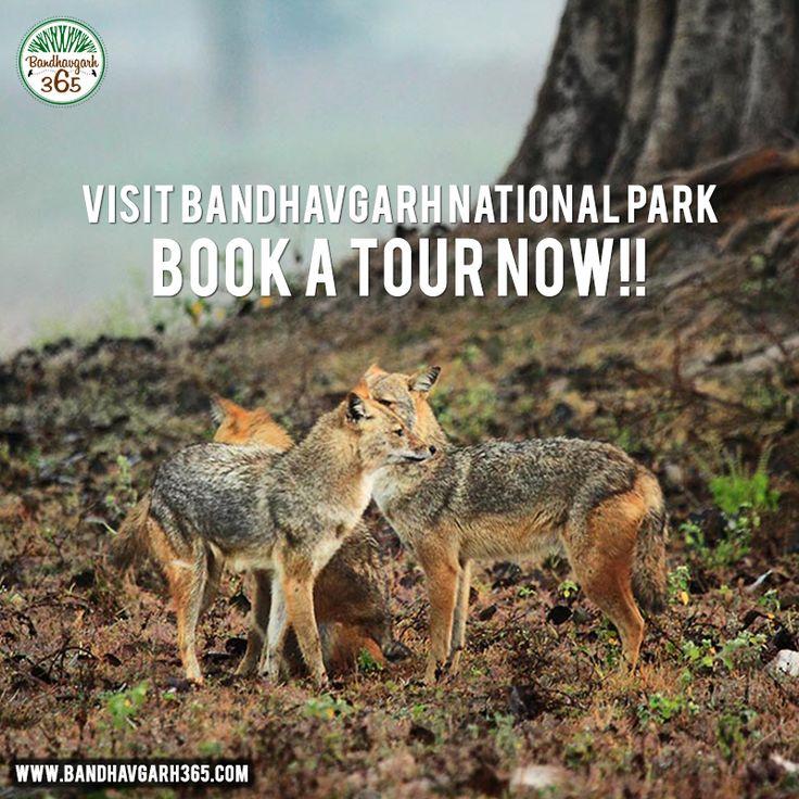 Visit #BandhavgarhNationalPark Book A Tour Now!!!