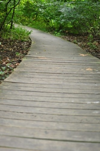 I Love A Wooden Walkway! An Interesting Alternative To Stone Or Brick