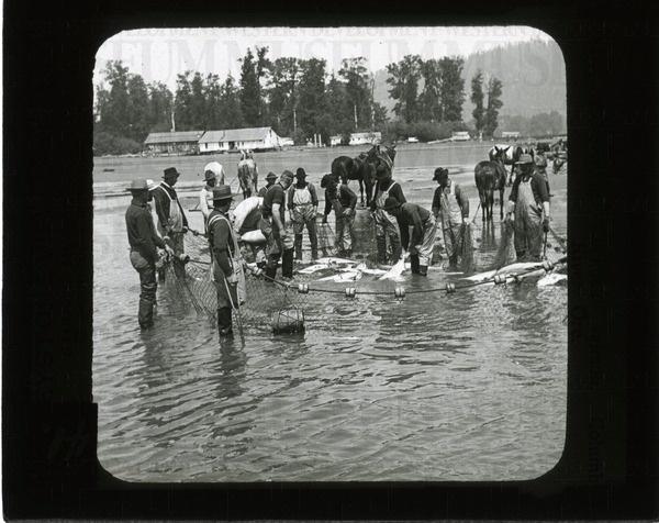 Seining Chenook ie. [Chinook] salmon, Columbia ... | saskhistoryonline.ca