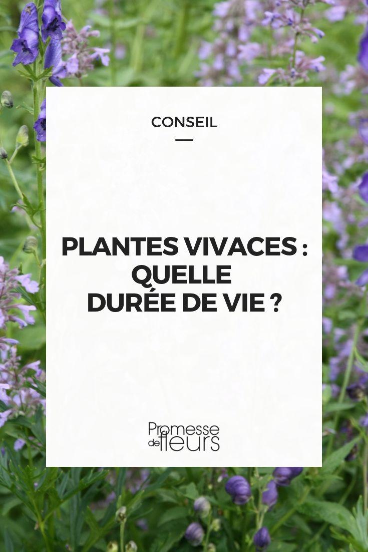 Terrasse En Palette Duree De Vie la durée de vie des plantes vivaces | plante vivace, jardins