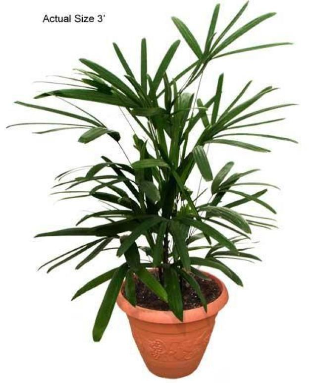 Top 10 Air Purifying Plants For Your Home Home The O