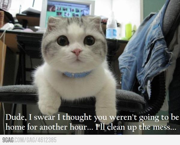 Cat Masturbating 14