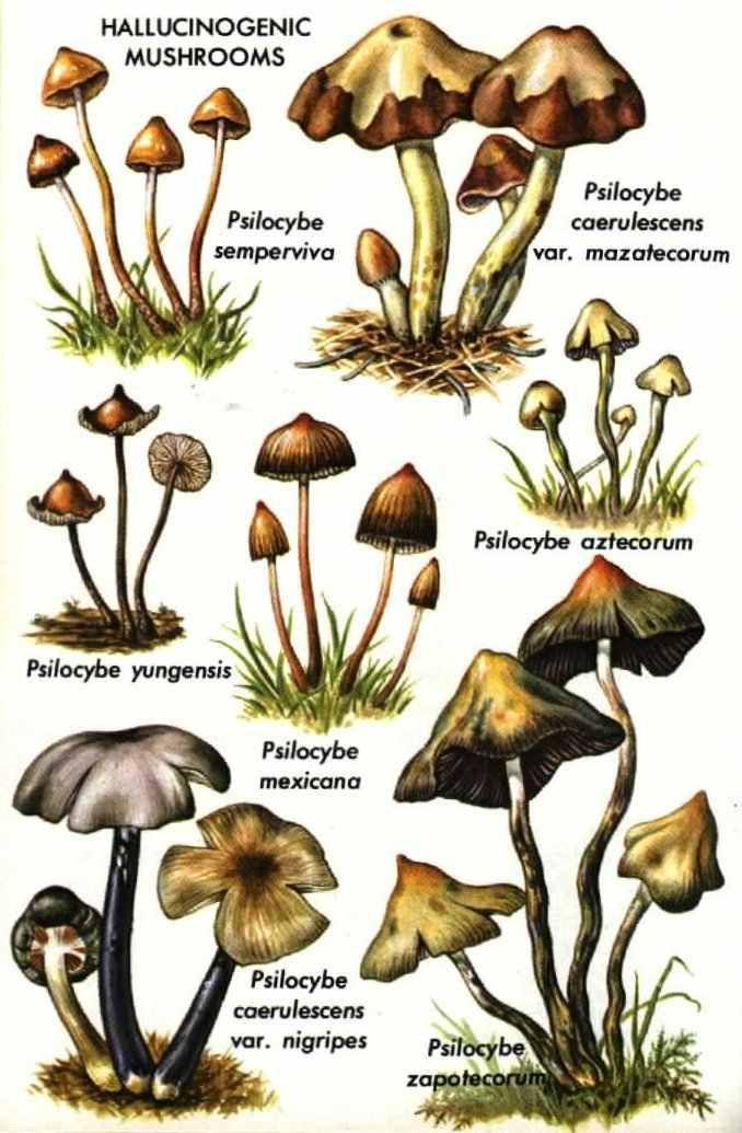 """Erowid Online Books : """"Golden Guide Hallucinogenic Plants"""" - pg 61-70"""