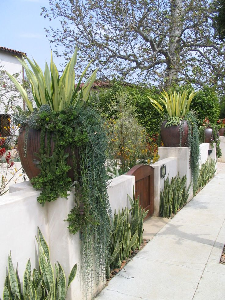 Amazing Ice Plant decorating ideas for Stunning Landscape Mediterranean design ideas with container planting curb appeal drought tolerant entry gate front yard Mediterranean Spanish
