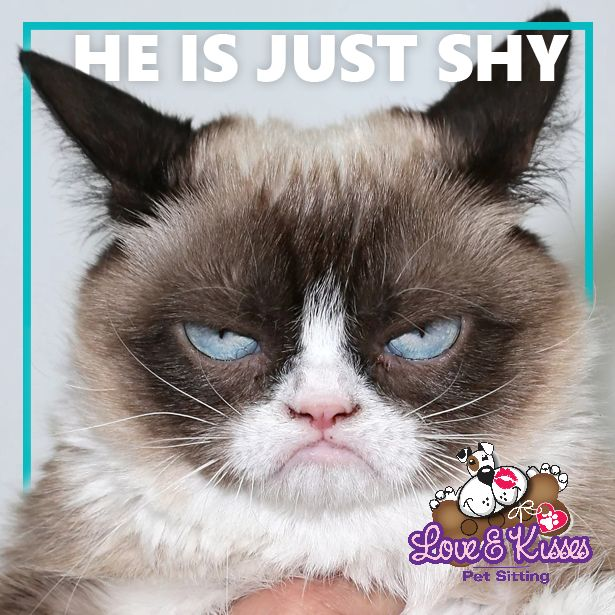 Love and Kisses Pet Sitting understands each #Cat has their own unique personality. What is your #Cats unique personality trait?   Visit http://www.loveandkissespetsitting.net to learn about our pet sitting services!