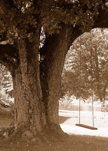 i want a wooden swing hanging off of a huge tree in my yard someday. :)