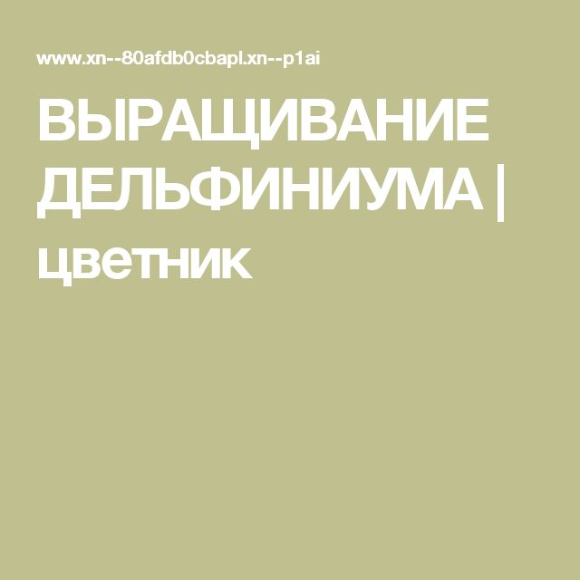 ВЫРАЩИВАНИЕ ДЕЛЬФИНИУМА | цветник
