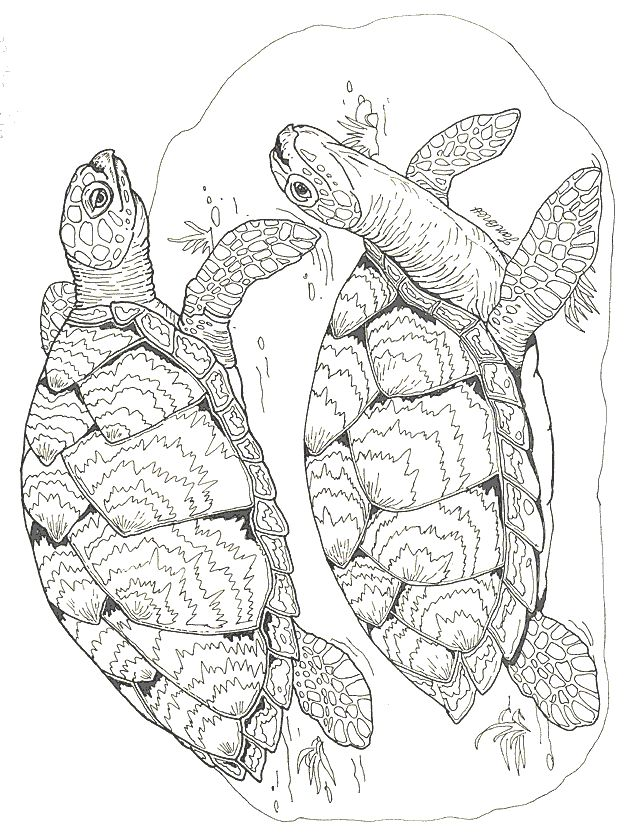 2218 best images about adolt colouring sheets on pinterest Coloring book subscription