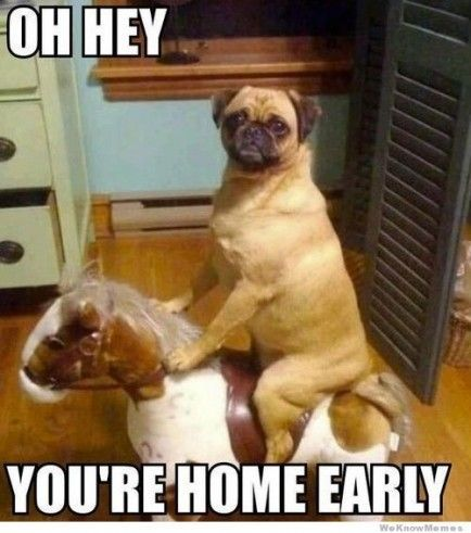 funny puppies with memes | Funny Dog Memes | dogs and etc