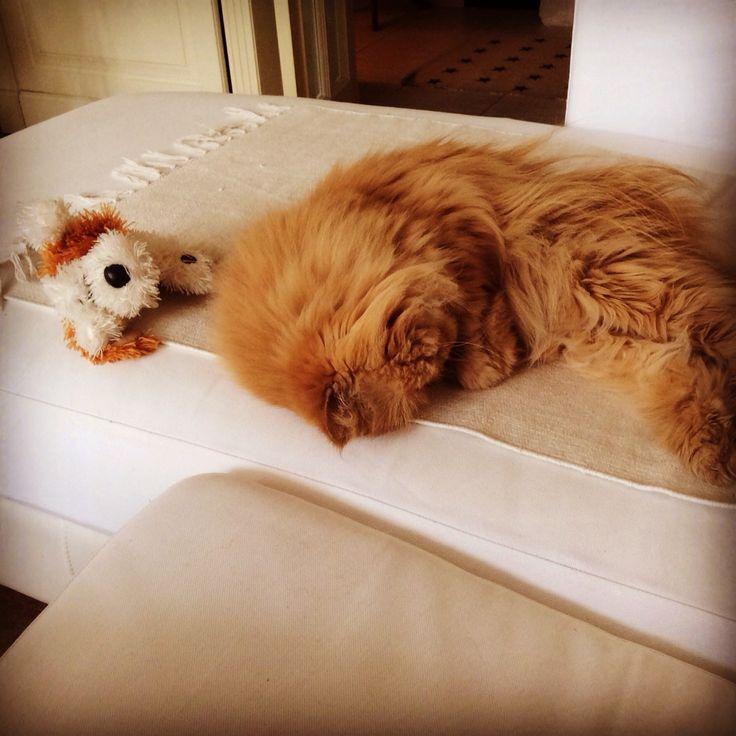 Сладкий сон с любимой игрушкой.