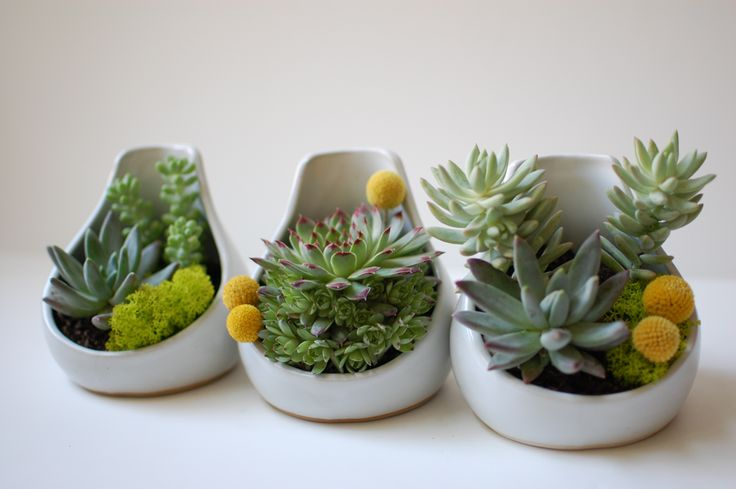 Teardrop Planter-White Glaze-Small: Ideas, Succulents Planters, White Pots, Succulents Plants, Succulents Gardens, Tables Flower, Buttons, Soft Drinks, Succulents Centerpieces