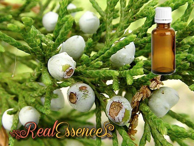 Juniper Berry Essential oil 100% Pure & natural essential oil 10 ml amber bottle