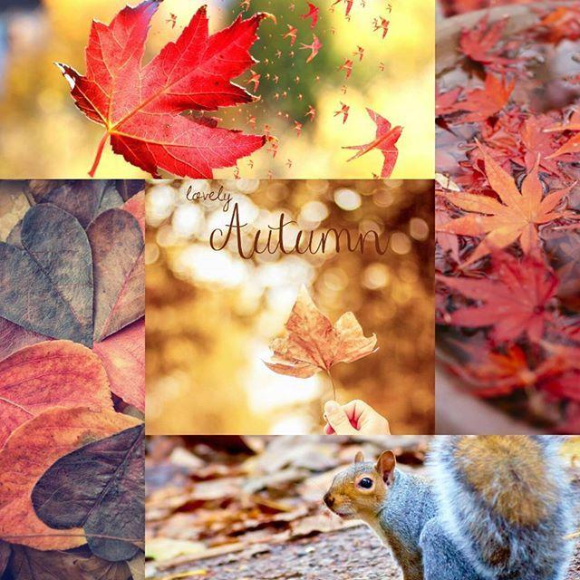 Primo ottobre benvenuto! Abbracciamo insieme l'autunno, la stagione dai caldi colori, della cioccolata calda, delle zucche, della pioggia leggera e dell' oscurità serale anticipata. La stagione del mistero, dei mutamenti e degli amanti come me di Halloween. #autunno #halloween #instalike #instagood #instalove #instamood #instaautumn #eilanmoon #loveautumn #ottobre #october #foglie #scoiattolo #instafollow #instagram #autumn #parco #bosco #castagne #montagna #buonautunno